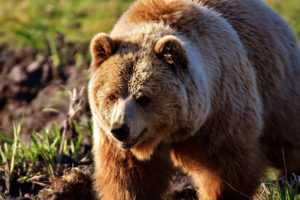 Загадки о медведе с ответами