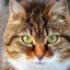 Пословицы и поговорки о кошках