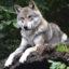Загадки о волке