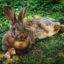 Лучшие загадки про зайца