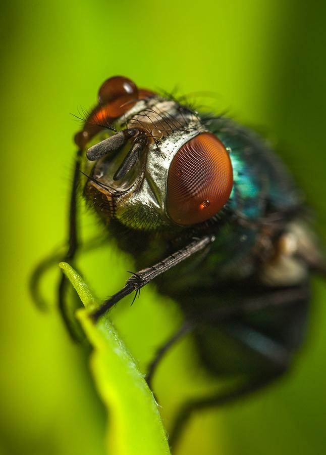Загадки о насекомых