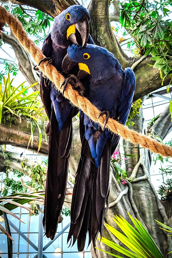 Загадки о попугаях для детей