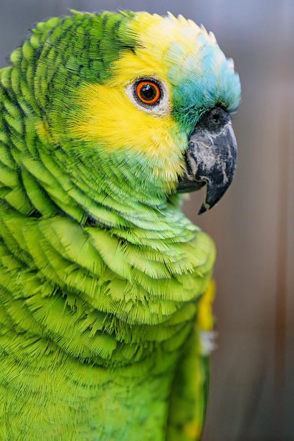 Детские загадки про попугая