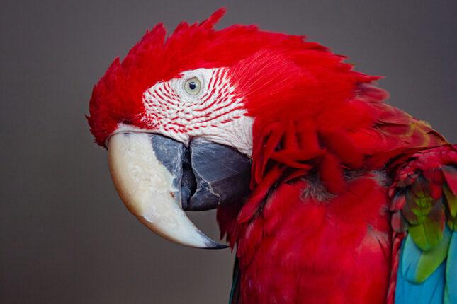 Загадки про попугая с ответами
