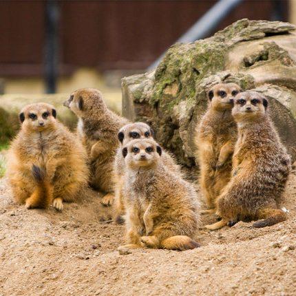 Страна ЕНОТиЯ - контактный зоопарк