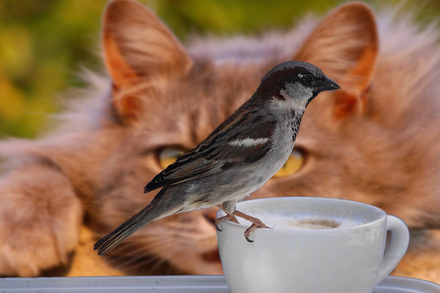 Загадка про воробья и кошку